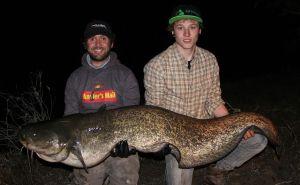 river-ebro-catfish-1