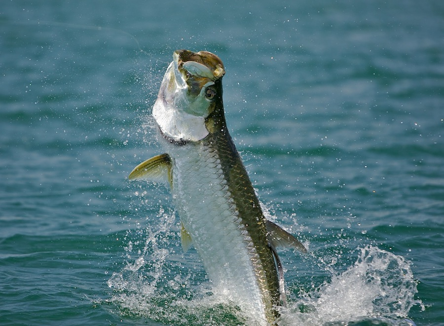 Wnwpressrelease just another site page 17 for Florida non resident fishing license cost