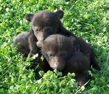cubs1