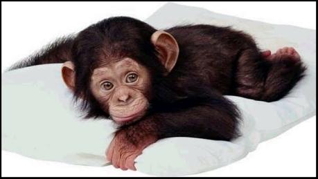 cute_monkey1