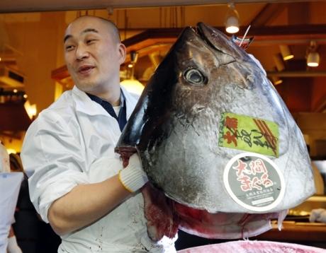 130105-tuna-hmed-8a.photoblog600