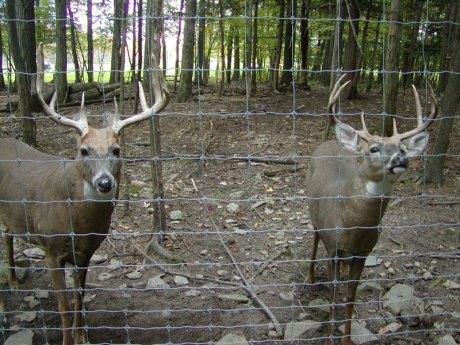 deer-pen