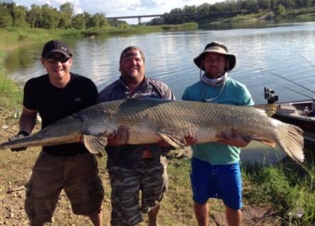 outdoorhub-anglers-catch-release-monster-alligator-gar-2014-11-03_17-12-07-800x574