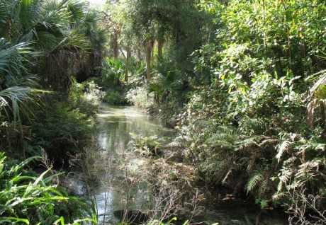 Juniper_Springs_Ocala_National_Forest