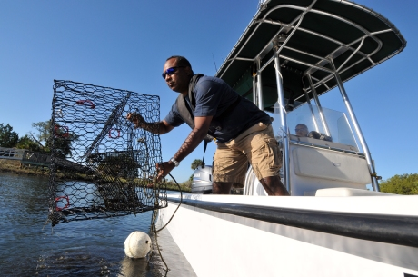 blue-crab-trap-fwc